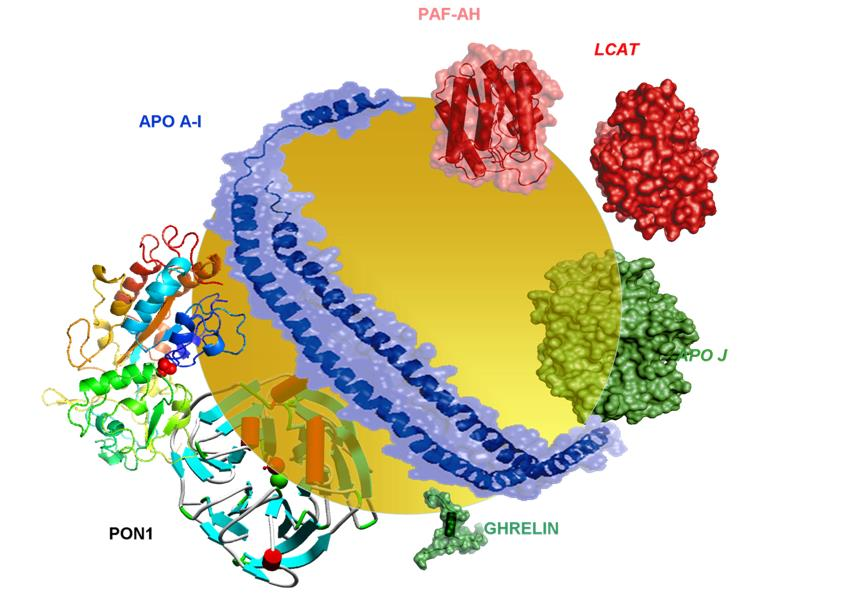 Struttura delle HDL