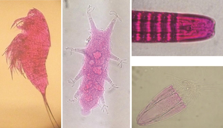 Analisi della diversità genetica dei nematodi