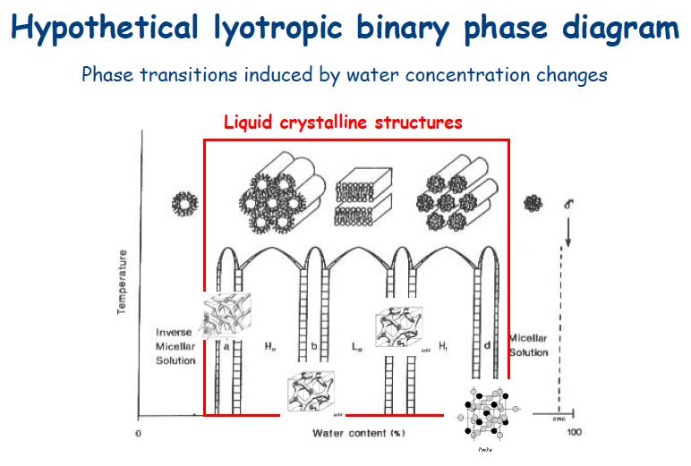 Polimorfismo lipidico: diagramma di fase teorico per sistemi rigorsamente liotropici. La struttura delle diverse fasi è mostrata in forma schematica: a,b,c, d, fasi cubiche; H_I e H_II, fasi esagonali diretta e inversa; La, fase lamellare liquido-cristallina.