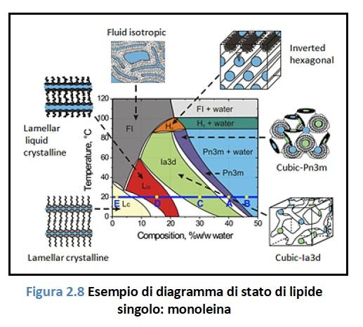 Polimorfismo lipidico: diagramma di fase sperimentale della monooleina in acqua. La figura mostra in forma schematica la struttura delle diverse fasi. Le due fasi cubiche sono bicontinue.