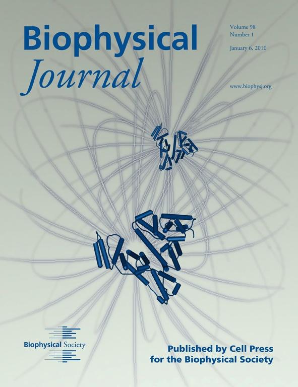 Copertina del Biophysical Journal del 6 gennaio 2010, che schematizza i potenziali di interazione tra due proteine, come ottenuti dall'analisi mediante GENFIT di curve SAXS da BSA (l'albumina di siero bovino) in soluzione concentrata.