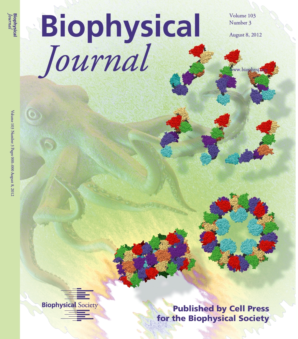 Copertina del Biophysical Journal dell'8 agosto 2012, che schematizza le proprietà strutturali e di aggregazione della emocianina di Octopus Vulgaris in soluizone, come ottenuti dall'analisi mediante QUAFIT di curve SAXS e SANS.