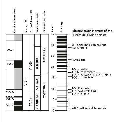 esempio di eventi biostratigrafici in una successione sedimentaria