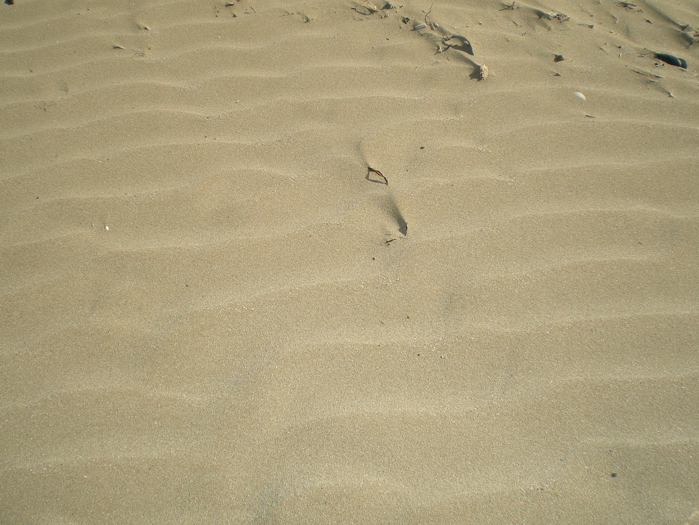 ripple da onda in sedimenti sabbiosi