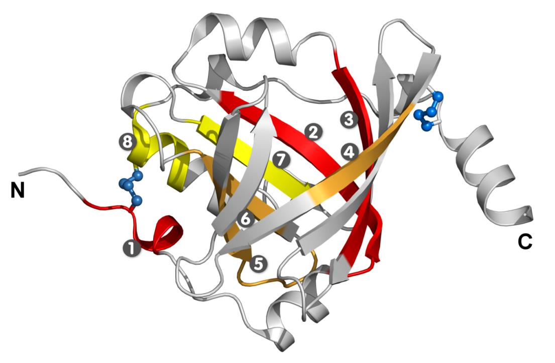Caratterizzazione strutturale/funzionale e potenziali applicazioni delle lipocaline, proteine leganti piccole molecole idrofobiche