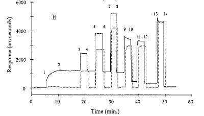 Interazione di proteine con membrane biologiche modello